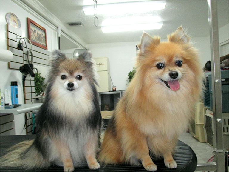 About us best groomers renees orlando dog grooming orlando dog grooming solutioingenieria Choice Image