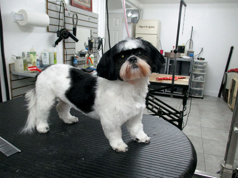 Dog grooming orlando pet grooming renees dog grooming whether its a hand scissor show cut puppy cut or short clipper cut renee will make your pet look their very best set an appointment with our solutioingenieria Images