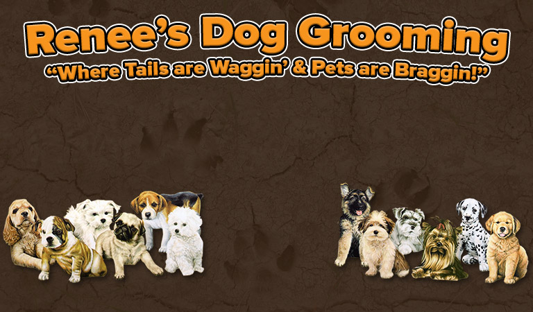 Dog grooming orlando pet grooming renees dog grooming solutioingenieria Choice Image